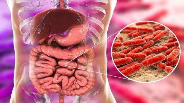 کاهش خطر بیماریهای قلبی با باکتریهای مفید دستگاه گوارش,باکتری