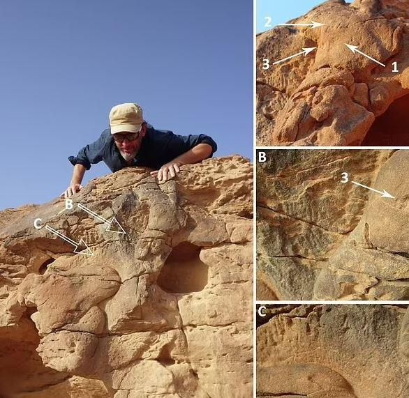 فسیل شتر,کشف فسیل شتر ۸ هزار ساله در عربستان