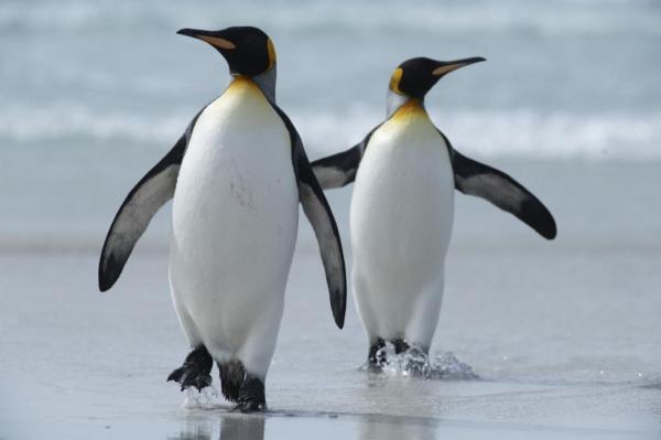 پنگوئن,ارتباط پنگوئن ها و بیگانگان فضایی