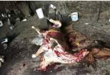 گوشت اسب و الاغ غیرمجاز,معدوم سازی گوشت اسب و الاغ غیرمجاز