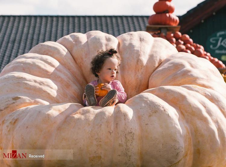 تصاویر جشنواره کدو تنبل در آلمان,عکس های جشنواره کدو تنبل,تصاویری از جشنواره کدو تنبل در کلن