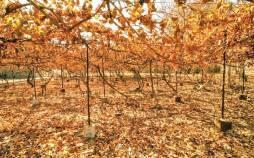 متوسط بارش استان تهران,خشکسالی تهران پاییز