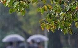 پیش بینی وضع هوا, سازمان هواشناسی