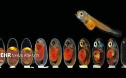 برندگان مسابقه عکاسی میکروگرافی جهان کوچک ۲۰۲۱,عکس های میکروگرافی جهان کوچک,مسابقه عکاسی میکروگرافی جهان کوچک