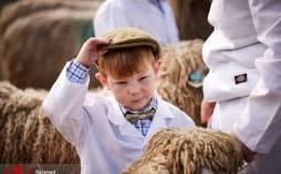 تصاویر نمایشگاه گوسفند در انگلیس,عکس های گوسفندها در انگلیس,تصاویر نمایشگاهی برای گوسفندها در انگلیس