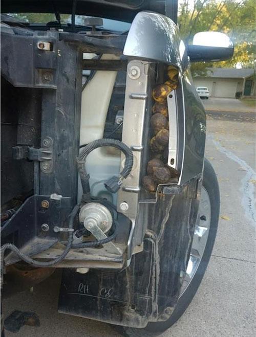 سنجاب,پر کردن ماشینی با پر از گردو توسط سنجاب بازیگوش