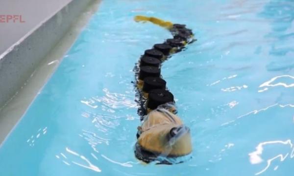 ربات شناگر,رباتی شناگر با الهام از ماهیان انگلی ۴۰۰ میلیون سال پیش