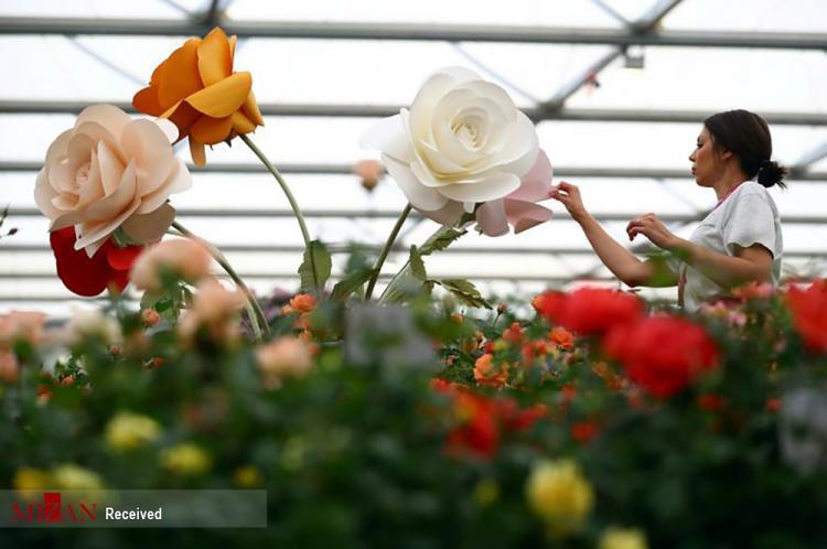 تصاویر هنر گل آرایی,عکس هایی از گل,تصاویر نمایشگاه شکوفهها و گل آرایی چلسی در لندن