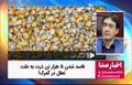 فیلم | فاسد شدن ۵ هزار تن ذرت به علت تعلل در گمرک