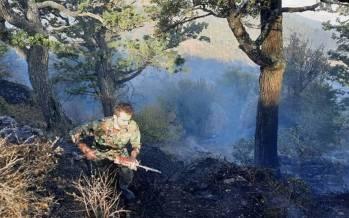 آتشسوزی شدید در درازنوی کردکوی,جنگل های کردکوی