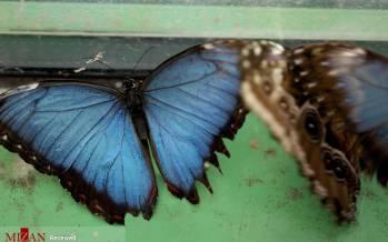 تصاویر نمایشگاه پروانهها,عکس هایی از نمایشگاه پروانهها,تصاویر نمایشگاه پروانه