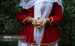 تصاویر انار چینی در قزوین,تصاویر فصل انار چیدن در قزوین,تصاویر انار چینی در شهر قزوین,تصاویر چیدن انار در قزوین