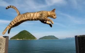 گربه,دلیل هفت جان بودن گربه