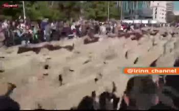 فیلم/ رژه گوسفندان در خیابانهای مادرید