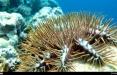 اخبار اجتماعی,خبرهای اجتماعی,محیط زیست,مرجان آبی