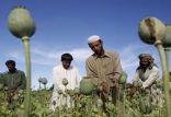 اخبار افغانستان,خبرهای افغانستان,تازه ترین اخبار افغانستان,کشت تریاک در افغانستان