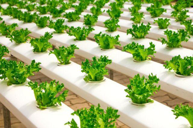 کشاورزی هوشمند,اخبار علمی,خبرهای علمی,پژوهش
