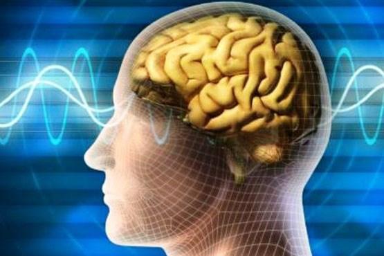 حافظه,اخبار پزشکی,خبرهای پزشکی,مشاوره پزشکی