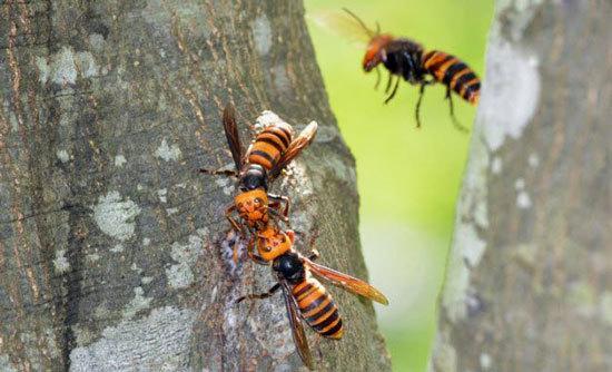 وحشتناک ترین حشرات,اخبار جالب,خبرهای جالب,خواندنی ها و دیدنی ها