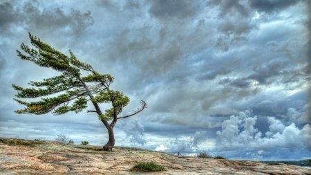 باد شدید,اخبار اجتماعی,خبرهای اجتماعی,محیط زیست