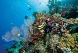 دیواره بزرگ مرجانی,اخبار علمی,خبرهای علمی,طبیعت و محیط زیست