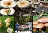 مسمومیت قارچی,اخبار پزشکی,خبرهای پزشکی,بهداشت