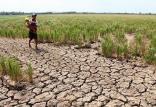 خشکسالی,اخبار علمی,خبرهای علمی,طبیعت و محیط زیست