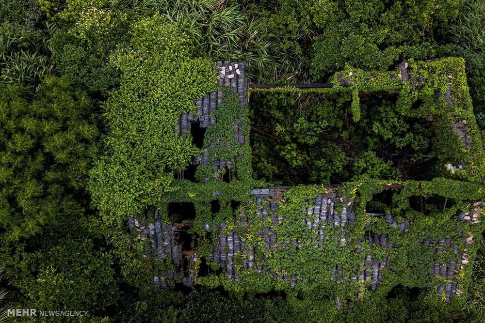 تصاویر روستایی در محاصره گیاهان خودرو,عکس های روستای هوتووان چین,تصاویرروستایی در جزیره کوچک شنگشان چین