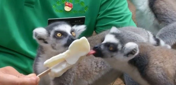باغوحش پکن,اخبار جالب,خبرهای جالب,خواندنی ها و دیدنی ها