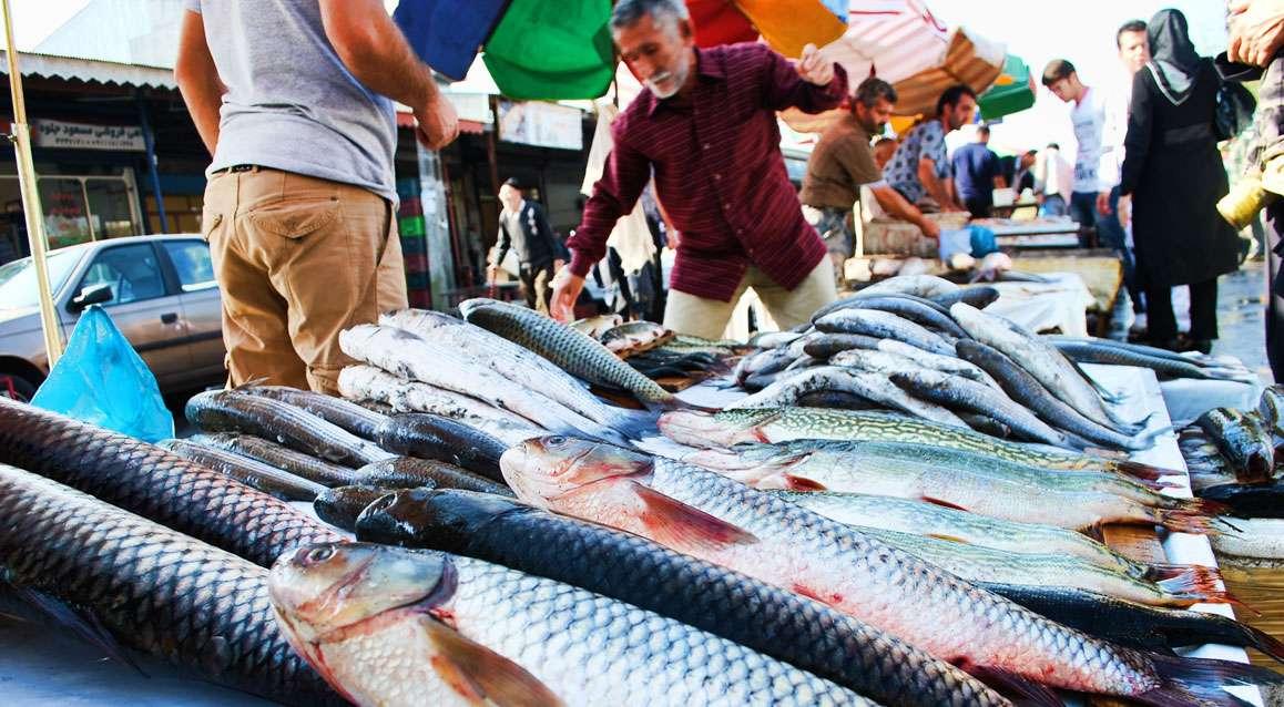 بازار ماهی,اخبار اقتصادی,خبرهای اقتصادی,کشت و دام و صنعت