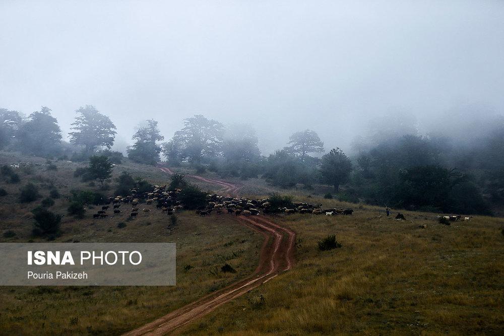 تصاویرجنگل ابر,تصاویر جنگلهای هیرکانی,تصاویر جنگل