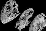 فسیل موش تخم گذار,اخبار علمی,خبرهای علمی,طبیعت و محیط زیست