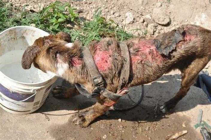 شکنجه سگ با موتورسیکلت,اخبار اجتماعی,خبرهای اجتماعی,محیط زیست
