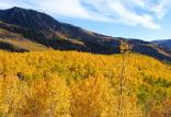 نابودی جنگل در آمریکا,اخبار علمی,خبرهای علمی,طبیعت و محیط زیست
