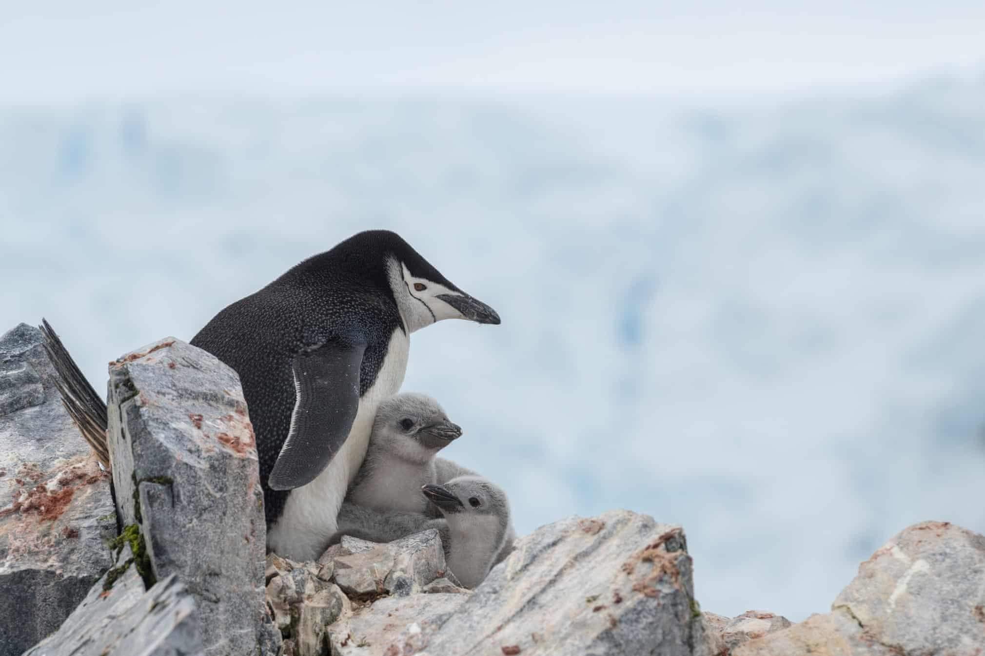 تصاویر منتشر نشده از حیوانات,تصاویر خاص از حیات وحش,عکس های جذات حیات وحش