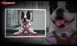 ویدئو/سگ خانگی و ده نوع از برترین نژاد آنها + شرایط نگهداری