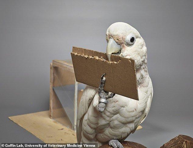 طوطی,اخبار علمی,خبرهای علمی,طبیعت و محیط زیست