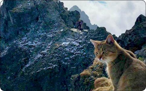 گربه کوه نورد,اخبار جالب,خبرهای جالب,خواندنی ها و دیدنی ها