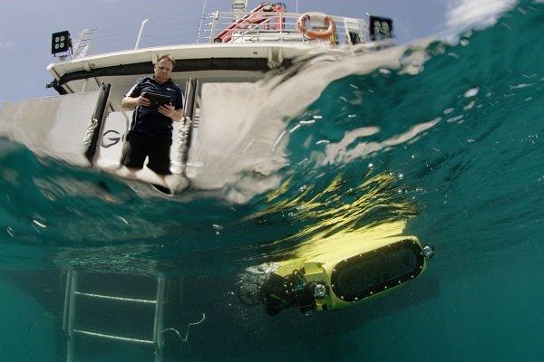 نجات جان مرجان های دریایی,اخبار علمی,خبرهای علمی,طبیعت و محیط زیست