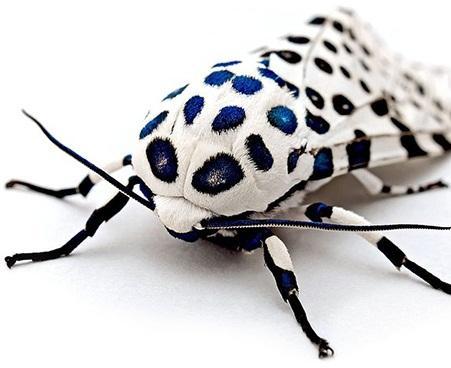 حشرات زیبا,اخبار جالب,خبرهای جالب,خواندنی ها و دیدنی ها