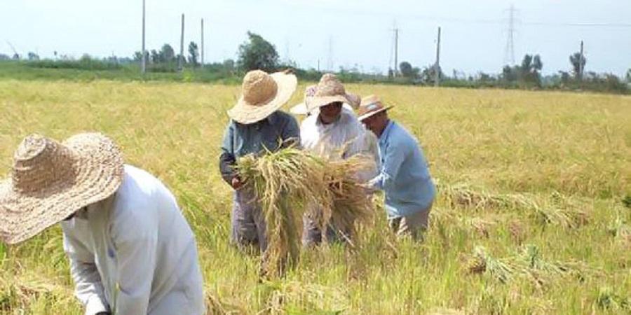 دلایل مهاجرت کشاورزان,اخبار اجتماعی,خبرهای اجتماعی,محیط زیست