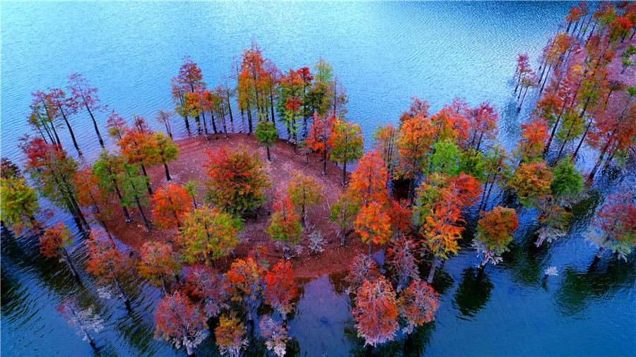 تصاویرجنگلهای هزار رنگ چین,عکس های  جنگل های رنگانگ استان ژجیانگ چین, تصاویر رنگارنگ جنگل های چین در فصل پاییز