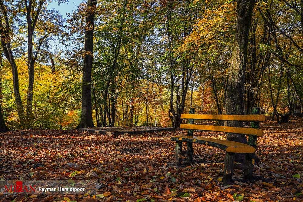 تصاویرجنگل گلستان,عکس های زیبای جنگل های گلستان,تصاویر دیدنی جنگل گلستان در پاییز