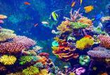 صخرههای مرجانی,اخبار علمی,خبرهای علمی,طبیعت و محیط زیست