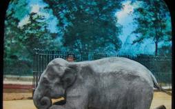 عکس از باغوحش لندن,تصاویر رنگی از باغوحش لندن,تصاویر رنگی باغوحش لندن در یک و نیم قرن گذشته