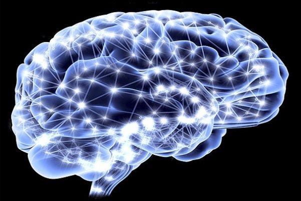 نورون های مغز,اخبار پزشکی,خبرهای پزشکی,تازه های پزشکی