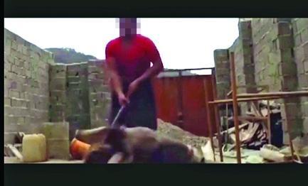 فیلم تکاندهنده دیگری از شکنجه حیوانات باعث رنجش افکار عمومی شد