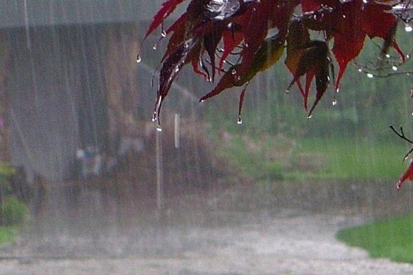 بارندگی,اخبار اجتماعی,خبرهای اجتماعی,محیط زیست