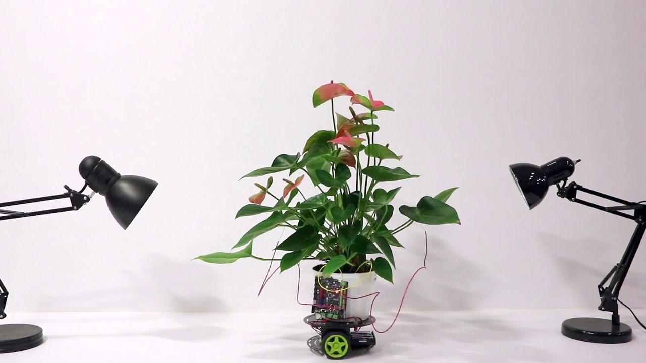گیاه Elowan,اخبار علمی,خبرهای علمی,اختراعات و پژوهش