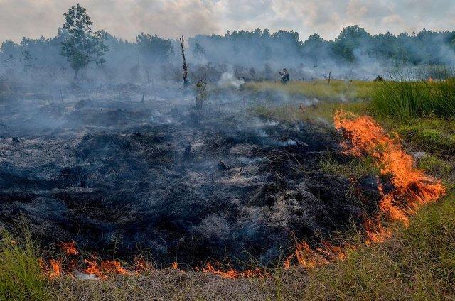 تخریب اراضی جنگلی,اخبار علمی,خبرهای علمی,طبیعت و محیط زیست